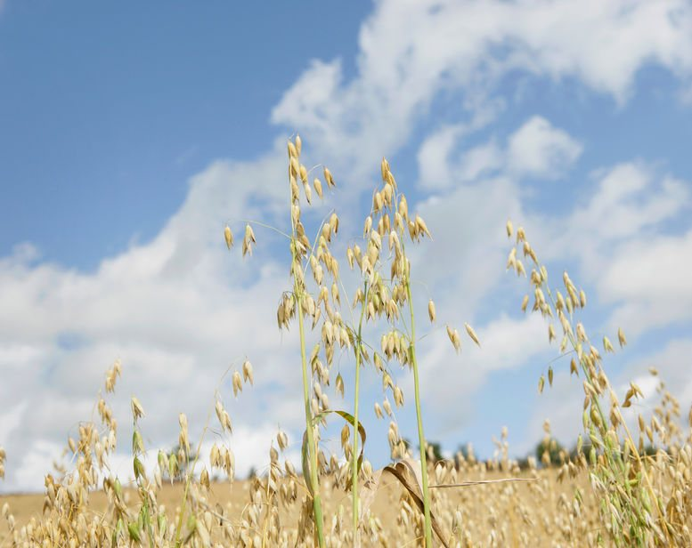 Last year, six oat growers participated in trials to develop blockchain technology