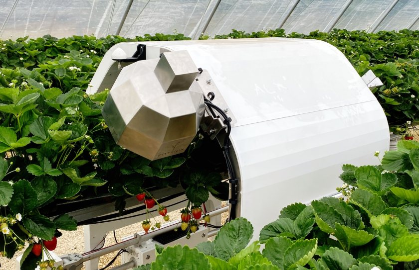The technology is able to identify diseases in real-time before crops develop symptoms