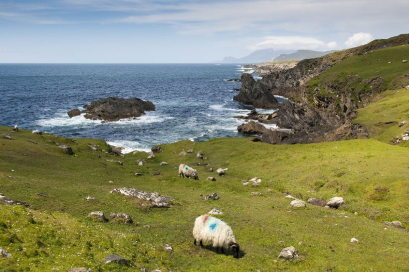 The financial support will compensate the NI sheep sector for losses incurred as a result of the pandemic