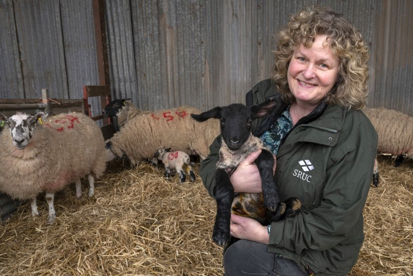 Dr Joanne Conington has developed breeding programmes for the sustainable genetic improvement of sheep