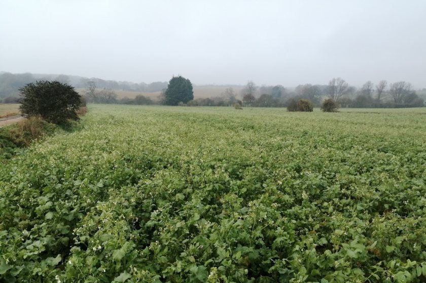 A cover crop funding scheme to reduce nitrate levels will be extended
