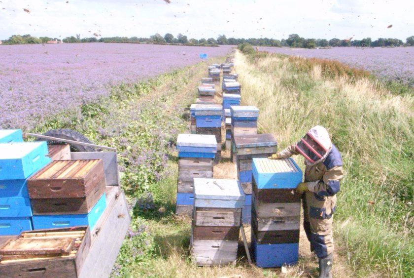 The retailer's bee programme aims to boost pollination and improve product quality