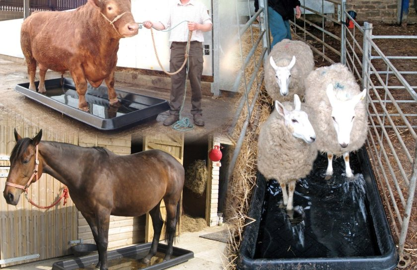 The washing action of a Paxton footbath will remove damaging material from hooves
