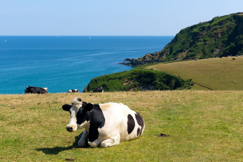 The project aims to investigate the effect of genetics and environment on cattle temperament