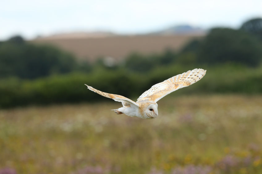 Barn owl rodenticide residues prompt reminder to users of the chemical
