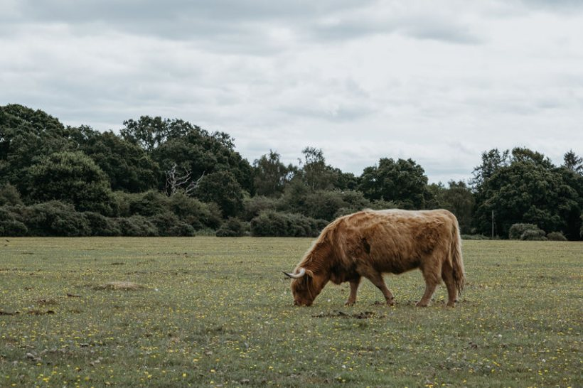 The government is changing the way BPS payments are allocated to New Forest commoners