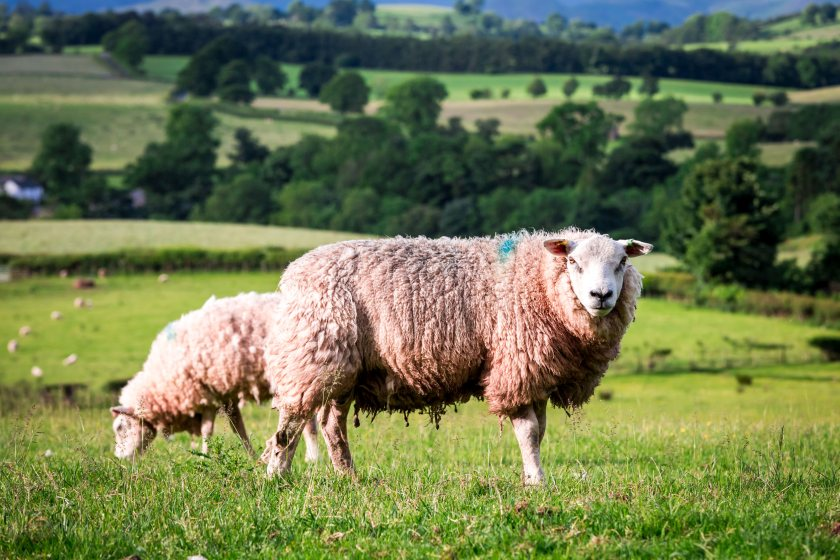 The guidance will help farms looking to reduce their dependence on wormers