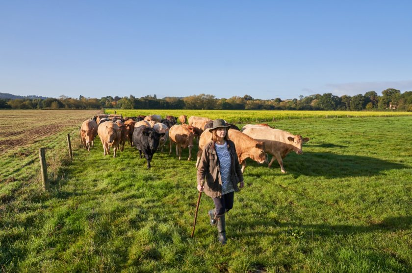 Figures show that UK beef boasts a carbon footprint of just less than half the global average (Photo: Ladies in Beef)