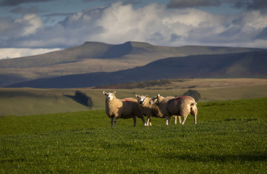 Welsh farmers are asking for payments to be capped at levels which favour family farms