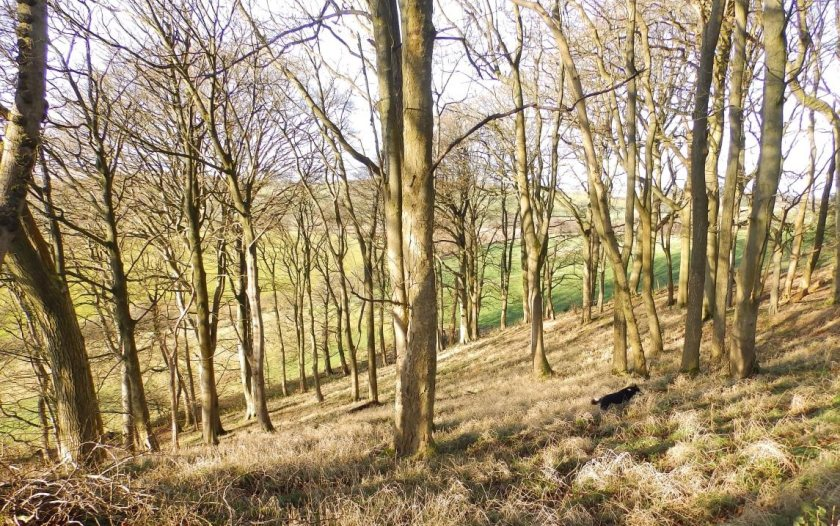 The farmer generates an income by selling wood as fuel while improving the woodland's environmental benefits