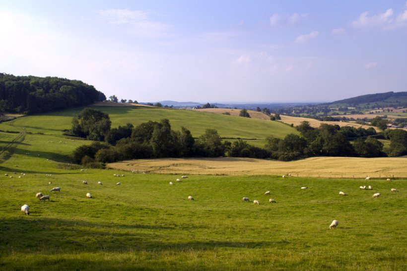 The sheep sector has welcomed Natural England's study which reviewed the carbon storage impact on UK habitats