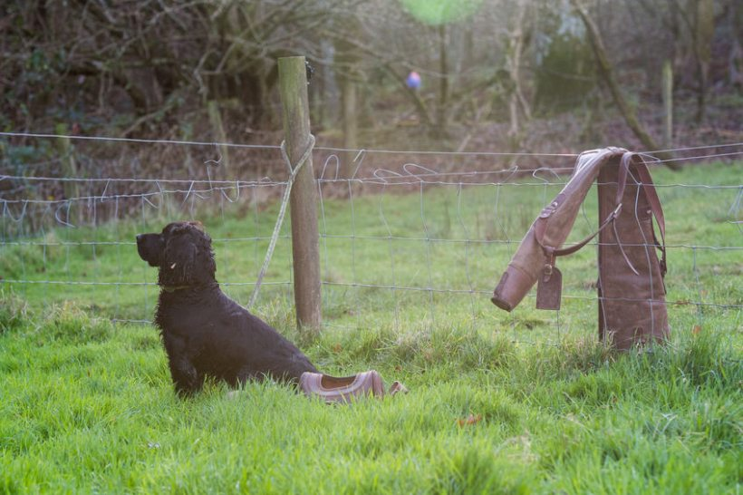The majority of dog owners in the countryside have taken additional action to stop thefts