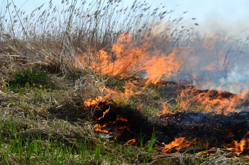 Wildfires have the capability to devastate farmland, wildlife and protected habitats