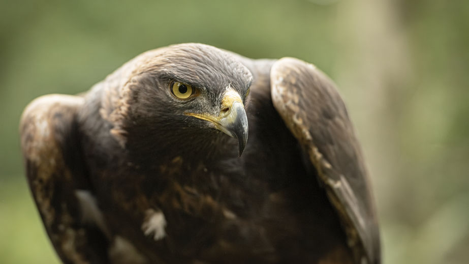 A public appeal has been issued following the discovery of a dead bird of prey in north east of Scotland