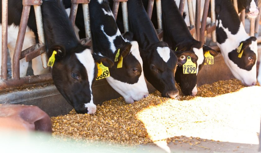 Unique monitors will be fitted to a network of dairy farms in south England