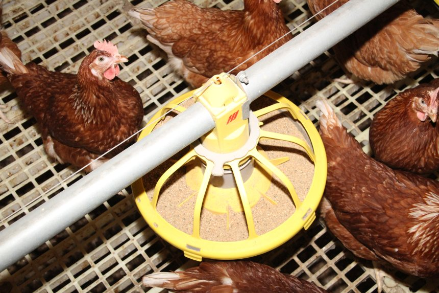 More than 80% of emissions calculated on free range egg farms are caused by animal feed, a report says