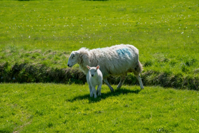 It is feared many tenant farmers could be excluded from participating in future agri schemes