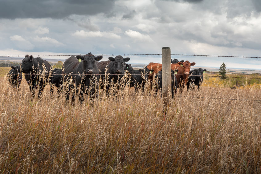 Farmers fear UK concessions to Australia and Canada would open the market to lower-quality imports