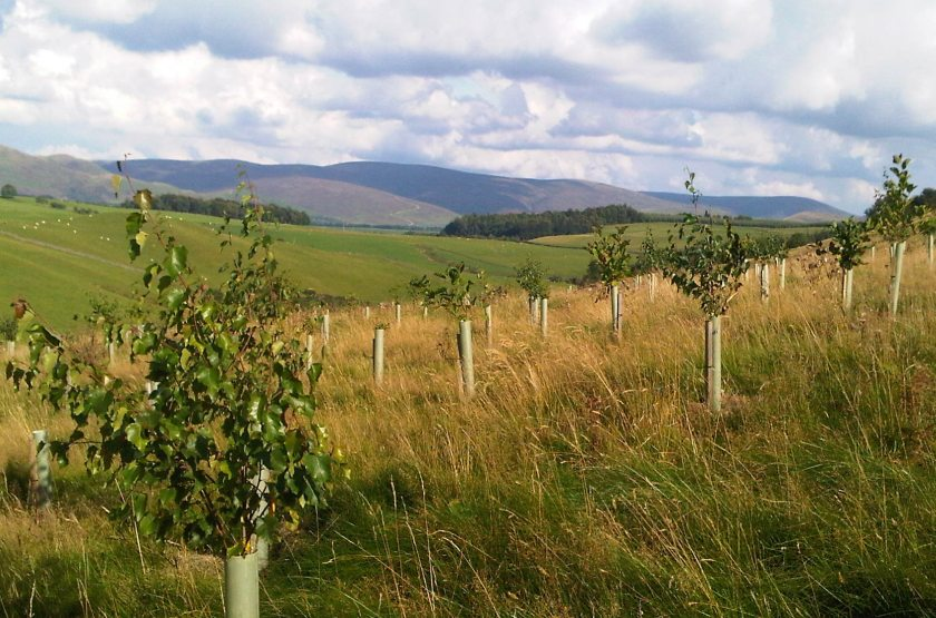 Farmers and land managers will soon be able to apply to the new woodland grant offer