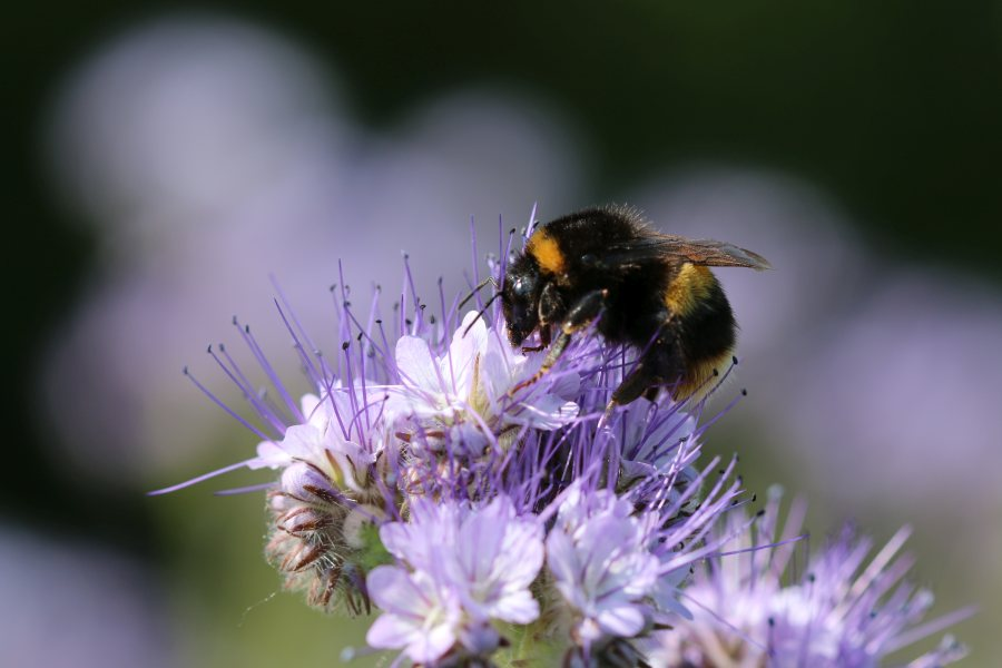 The focus on bees is something that the family would like to see other farmers getting involved in