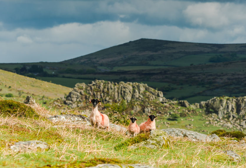 The report says there is a potential threat to important designated habitats in upland areas like Exmoor