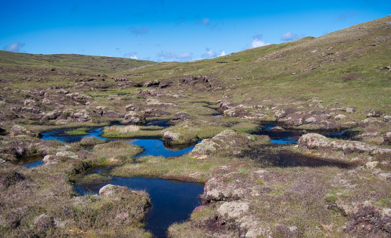 Farmers can apply to a grant scheme to restore peatlands in the uplands and lowlands of England
