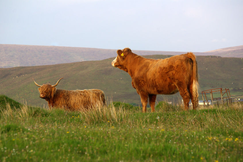 A new report has examined the sensitivity of Scotland's beef sector to imports