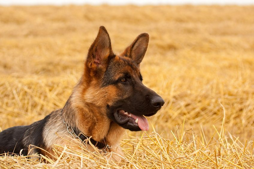 It will be made easier for police to collect evidence and, in the most serious cases, seize dogs
