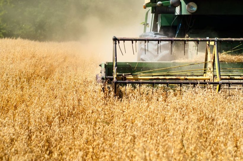Harvest is one of the busiest periods in the British farming calendar