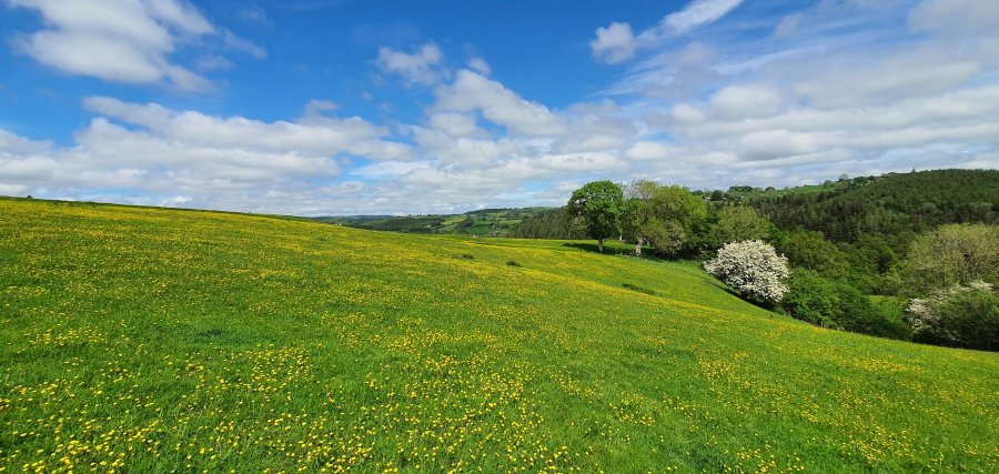The buttercups and other flowers in the meadows are doing wonders for the pollinators