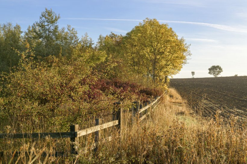 The government has been urged to make teaching the Countryside Code compulsory