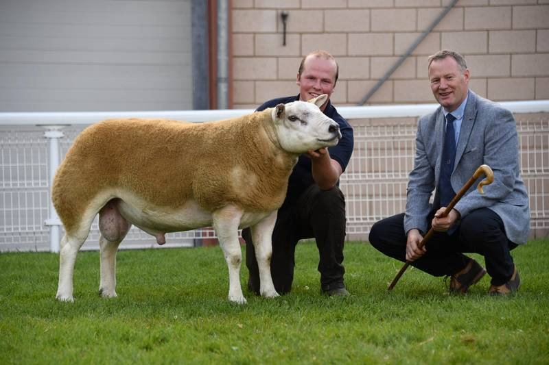 This year's breeding sheep sale season is fast approaching following a year of cancellations