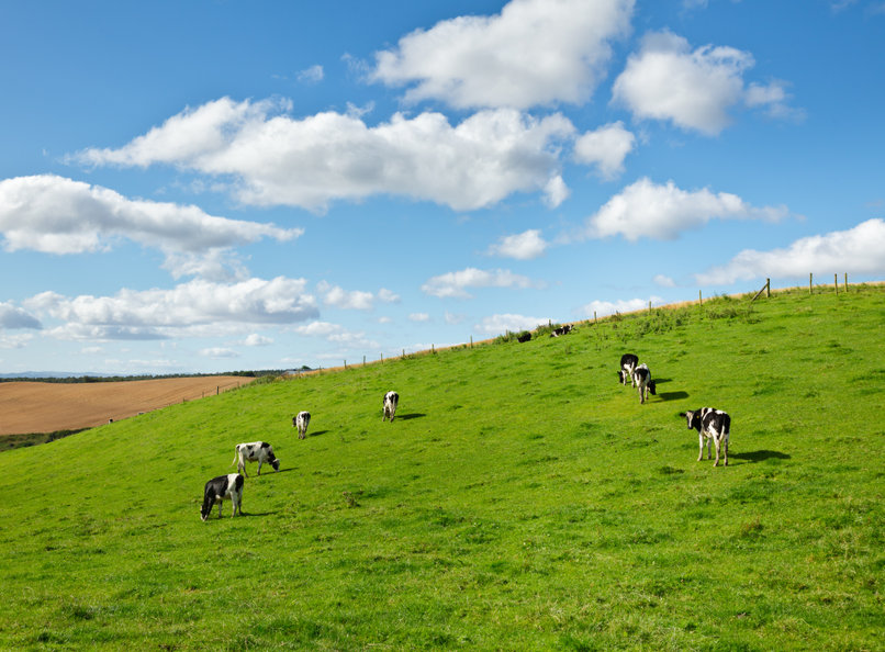 The dairy industry is an important part of southern Scotland's economy, as well as Cumbria's