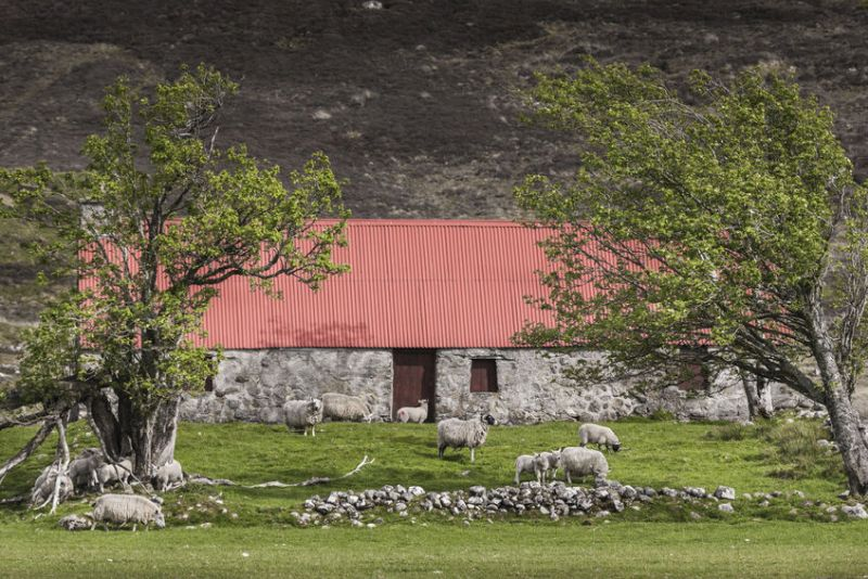 Crofters are seen to play an integral role contributing to the long-term sustainability of Scotland's rural areas