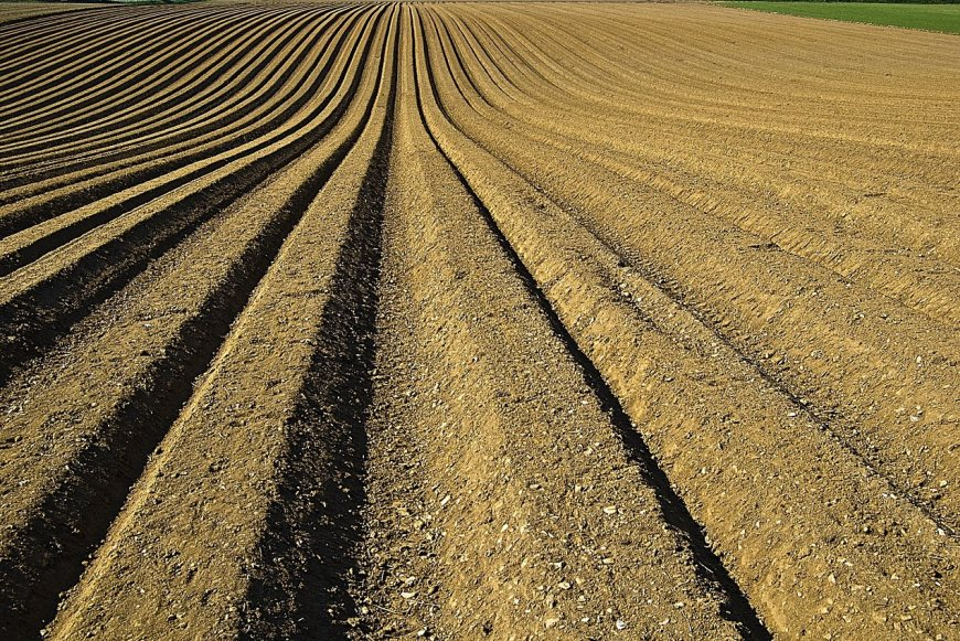 Carbon markets are set to provide farmers and landowners with substantial new income streams