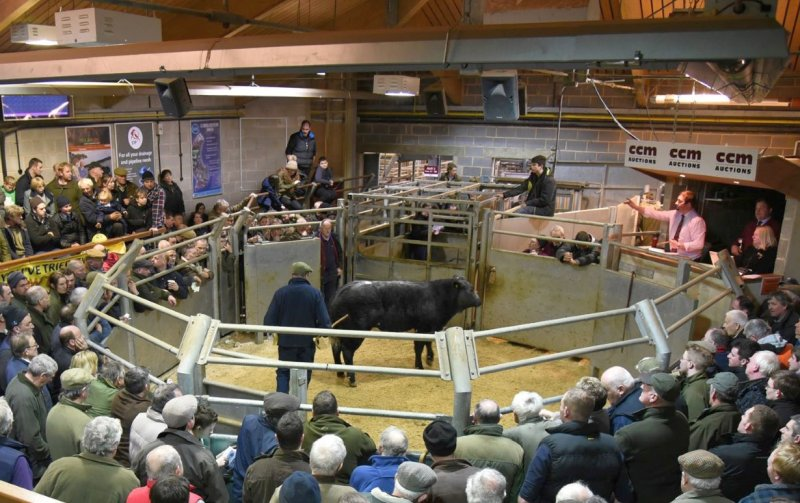 The report says marts have survived because of farmers' preference to see first-hand the stock they buy