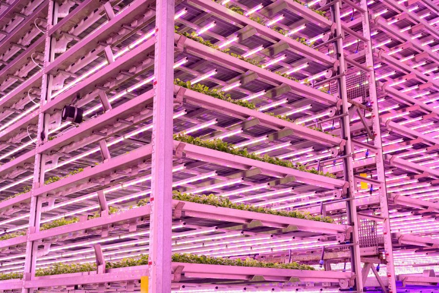 Indoor farming has seen a flurry of recent investment across the globe