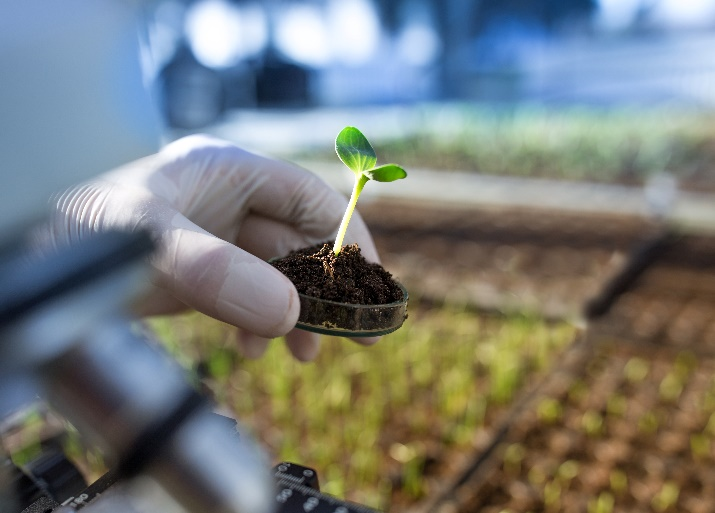Gene editing may transform agri-food systems if it can be separated from the legislation that governs GMOs