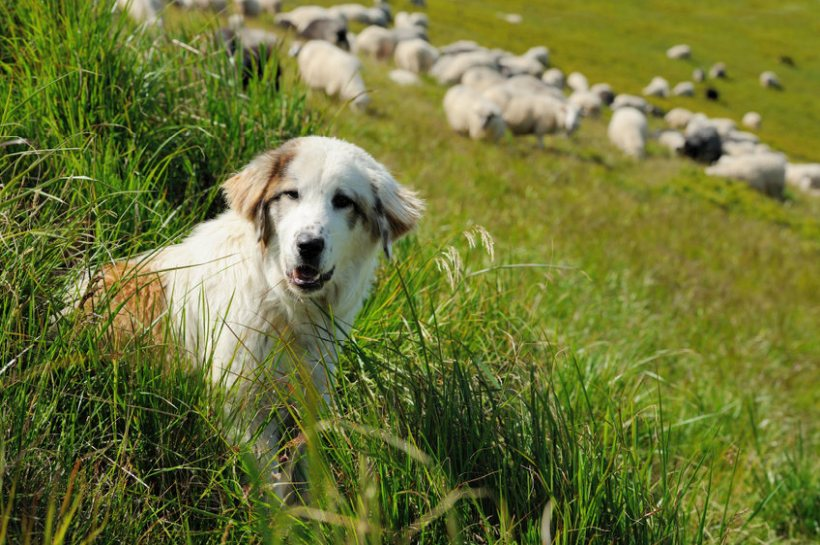 Working dog theft is an ongoing issue for the sector, which has seen a rise in the number of reported thefts