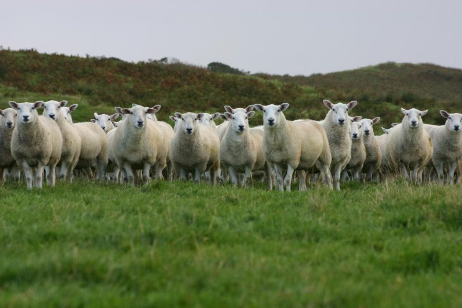 Sheep farmers are being encouraged to donate over 2.5 tonnes of lamb to schools this November