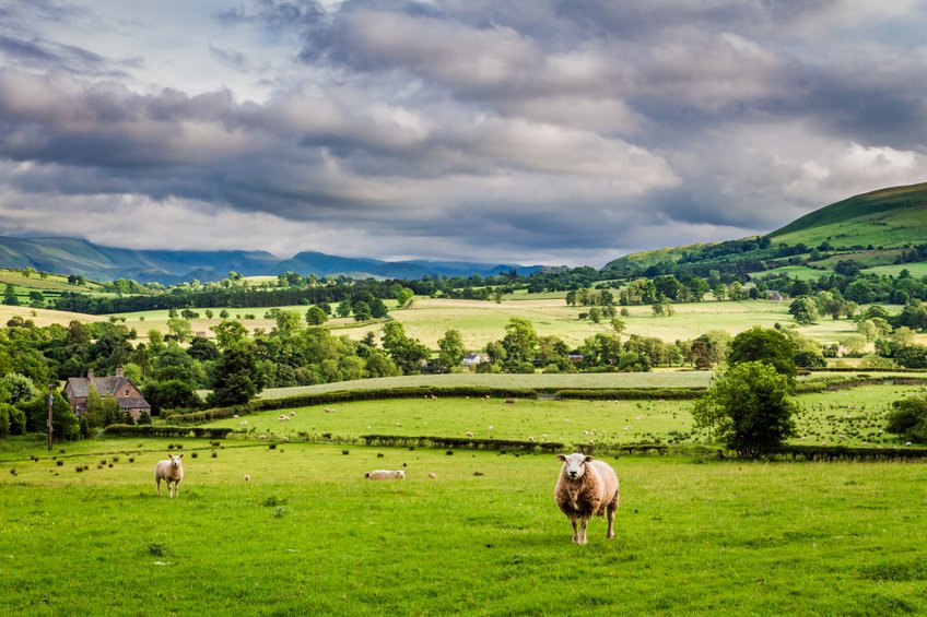 The success of the UK's new agricultural schemes depends on securing participation from farmers, the NAO says