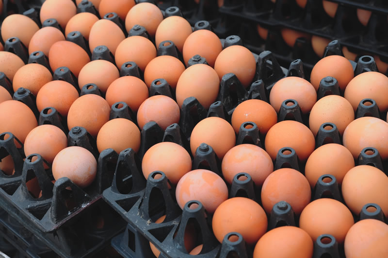 Consumers are being encouraged to consider the welfare of laying hens and consider buying other egg sizes
