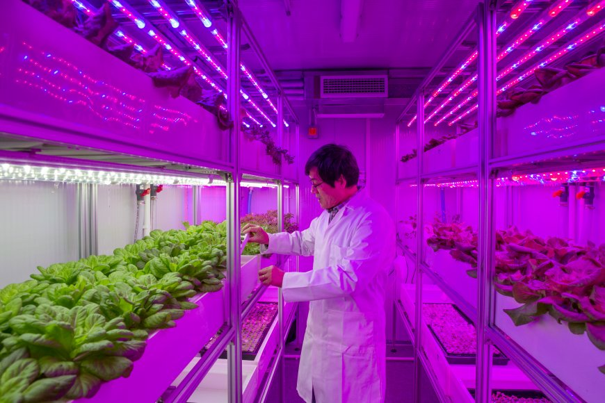 The aim of the high-tech project is to help reduce the UK's reliance on imported produce