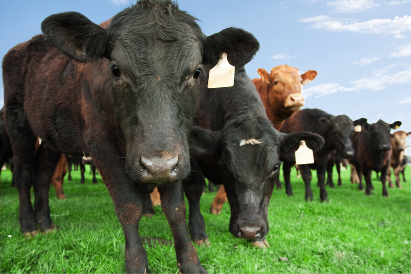China's General Administration of Customs said on Monday it has banned British beef imports